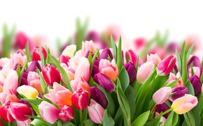 Picture flowers, blur, spring, colorful, tulips, colorful, flowers, beautiful, tulips