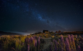 Picture the sky, flowers, night, house, the wind, trail, stars, New Zealand, hill, the milky way, …