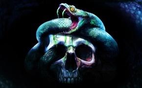 Picture background, fear, skull, snake, sake