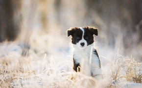 Picture winter, look, dog, puppy