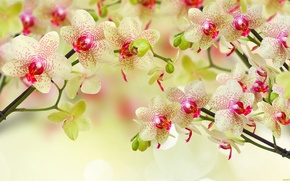 Picture flowers, yellow, orchids