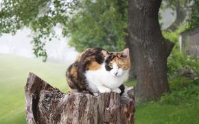 Picture cat, nature, tree, stump, sitting