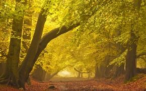 Picture road, autumn, landscape, fog