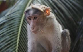 Picture Palma, animal, monkey
