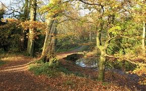 Picture autumn, forest, foliage, trail, channel, forest, Nature, the bridge, falling leaves, bridge, autumn, leaves, path, ...