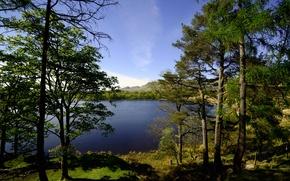 Picture trees, lake, shore, Scotland, Glasgow