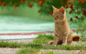 Picture greens, cat, summer, grass, flowers, kitty, background, red, cute, sitting