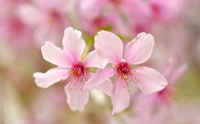 Picture flowers, nature, paint, petals