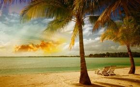 Picture sand, sea, beach, palm trees, shore, summer, beach, sea, tropical, palm
