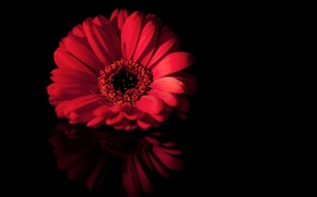 Picture flower, macro, red, reflection, black, petals