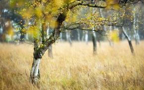 Picture autumn, trees, nature