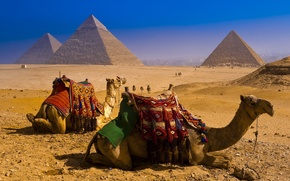 Picture desert, pyramid, Camels