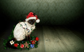 Picture cat, look, Christmas decorations, the gingerbread man