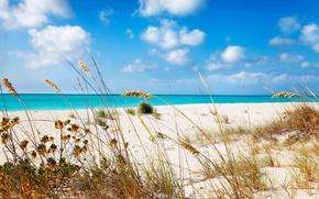Picture sand, sea, beach, grass, shore, Grace, beach, bay