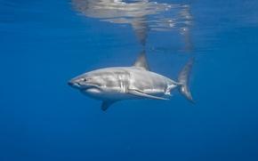 Picture sea, nature, shark