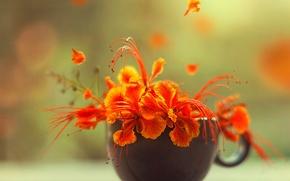 Picture macro, flowers, petals, Cup