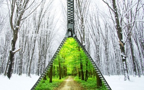 Picture winter, forest, summer, snow, trees, foliage, lightning