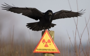 Wallpaper plate, Chernobyl, Raven, radiation hazard, column