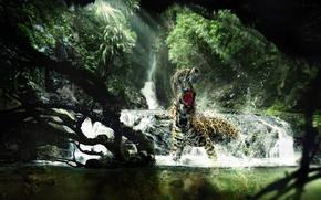 Picture monkey, leopard, fight