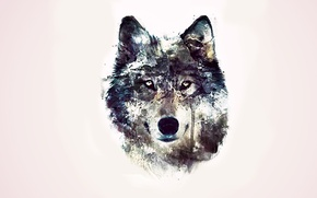 Picture eyes, background, abstraction, wolf
