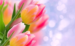 Picture leaves, glare, tulips, buds, bokeh, closeup