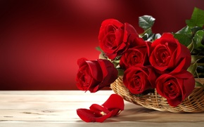 Picture love, flowers, roses, valentine's day