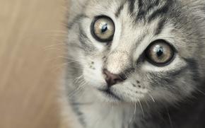 Picture eyes, mustache, kitty, deviantart, i am sorry, trowel bass