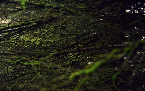 Picture greens, forest, tree, moss, Macro