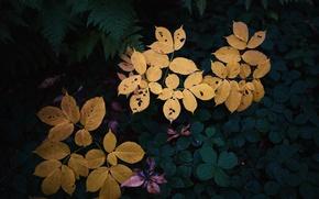 Picture colors, leaves, garden, plants