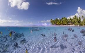 Picture fish, corals, the bottom of the sea, coconut