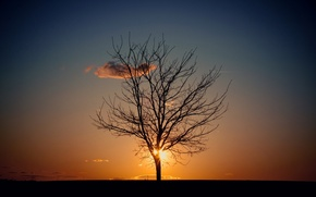Picture the sky, the sun, tree, the evening