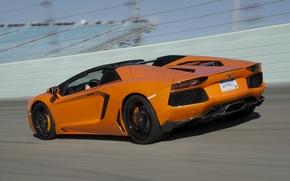 Picture Roadster, rear view, roadster, orange, lp700-4, aventador, Lamborghini Aventador