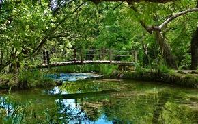 Picture FOREST, WATER, GREENS, REFLECTION, TREES, RIVER, BRIDGE, VEGETATION, FOLIAGE, ALGAE, PERILLA, The BRIDGE