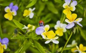 Picture macro, flowers, ladybug, beetle, anytin eyes
