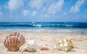 Picture sand, sea, surf, shell, shell