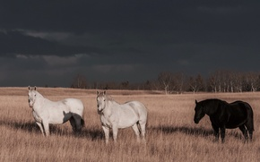 Picture the storm, field, clouds, trees, shadow, horse, sunlight