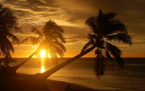 Picture nature, palm trees, BEACH