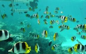 Wallpaper Fish, Carly, The ocean