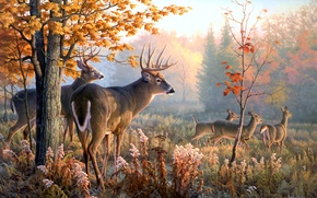 Picture animals, Throw Caution to the Wind, picture, Greg Alexander, deer