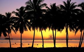 Picture palm trees, Sunset, Island, Aitutaki