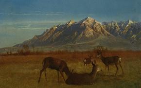 Picture animals, landscape, mountains, picture, Albert Bierstadt, Deer in mountain home