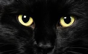 Wallpaper black cat, look, eyes, background