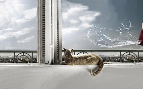 Picture cat, water, window, cat