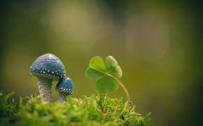 Picture macro, background, mushrooms, moss, leaves, Oxalis, Stropharia blue-green