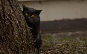 Picture eyes, cat, tree, black, looks