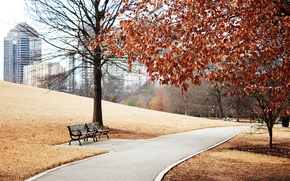 Wallpaper Park, slope, trees, the city, track, benches, foliage, view, building, grass, autumn, landscape, lawn