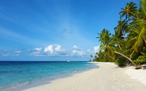 Picture beach, tropics, palm trees, the ocean, island, beauty, exotic, white sand, Мaldives