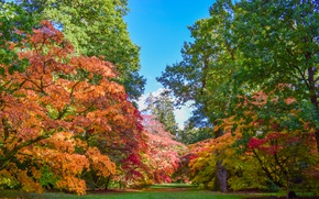 Picture autumn, grass, trees, Park, UK, Sunny, colorful, Westonbirt-Arboretum, Westonbirt Arboretum