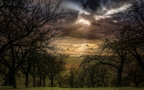 Picture field, clouds, trees, clouds, view, arable land
