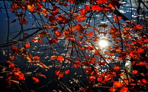 Picture autumn, leaves, water, branches, reflection, the crimson